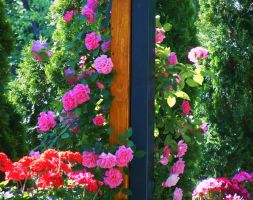 Rose season by VasiDgallery
