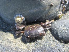 Crabby by leopard0825