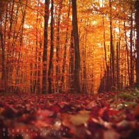 Couleurs d'automne IV by Somebody--else