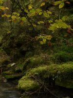 Lothlorien's valleys 11 by Dragoroth-stock