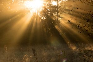 Autumn awakening by TShingen