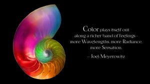 Joel Meyerowitz Quote by RSeer