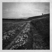 Not to stray from the path by Argolith