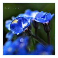 The Blues by Tanja0869