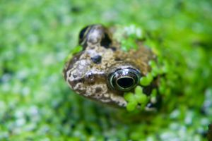 frog stock by twigstock