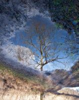 Oakreflection by Xs9nake