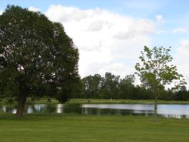 Trees by a Pond by FantasyStock