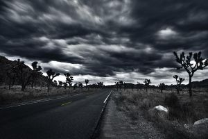 Joshua Tree Park after Thunder by leographics
