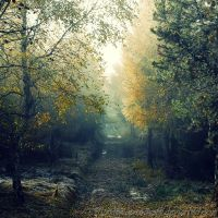 Autumn feelings no.19 by ThomasSchulz-Woelfer