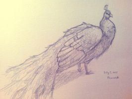 Daily Sketch | June 5, 2015 | Peacock by elise-fleuret