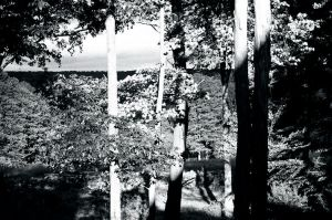 High Contrast Trees by Dionyza