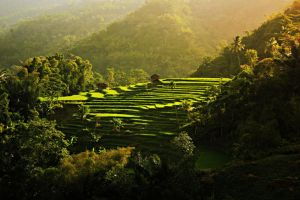 Rice terrace rising by derivagiana