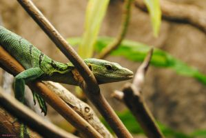 Green Tree Monitor by JayConstrictors12