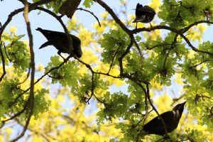 Birds of a feather flock together by pagan-live-style