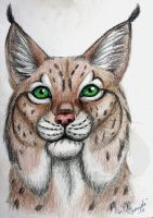 Lynx by Narncolie