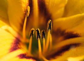 The Sun of Lily. by 48photography