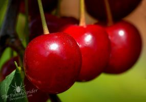More Cherries :) by TheFunnySpider