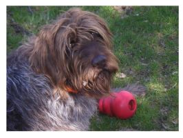 dog with kong by PeachAnn