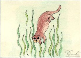 Otter Dive by ThisWomanWanders