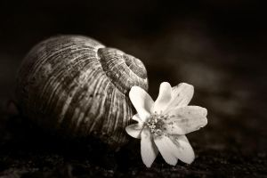Life dead indeed... by Ikabe