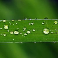 drops of water by augenweide