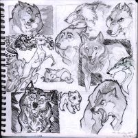 Wolf Sketch Studies by Sandora