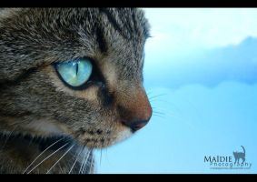Drown in your eyes by MaidiePhotos