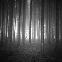 Fog Forest II by DREAMCA7CHER