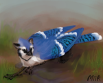 Bluejay Gryphon by miirgan