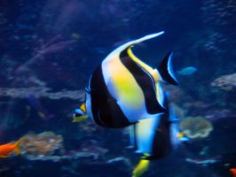 Georgia Aquarium 14 by Dracoart-Stock