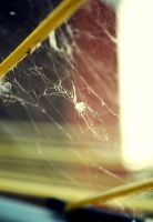 Spider Web 3 by MegBethany