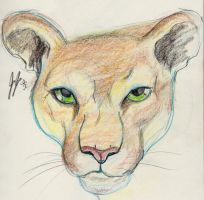 Mountain Lion by jEROMEaNIMATIONS