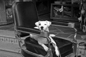 Dog in a Chair by austinh2o