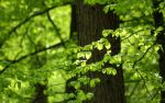 Green Leaves 2560x1600 by hermik