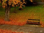 autumn in the park by shokisan