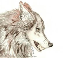 Angrey wolf by SangVarg