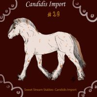 Candidis Import #29 by SweetStreamStables