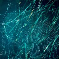 Spider Web Stock 10 by PrincessSaphronStock