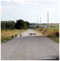 Traffic Jam Country Style by SuicideBySafetyPin