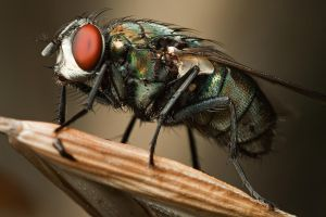 There's a Fly in My Backyard by knold