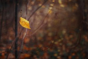 Rayon d'automne by k-simir