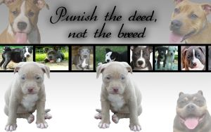 Pitbull Puppy Wallpaper by PiinkylOve19