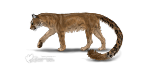 Leopard/Cougar Hybrid Adopt - Adopted by Feralx1