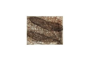 drypoint colours2 by Blachorum