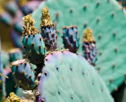 Prickly Cactus by slavicphotos