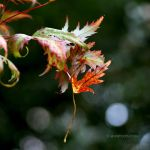 my local nature 10-18_01 by EvaShoots