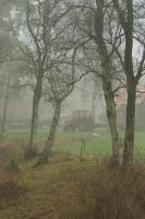 Tractor in misty woods by steppelandstock