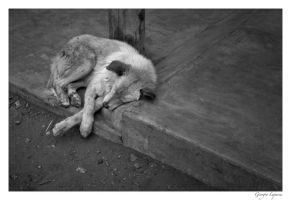 Street dog by bitflesh