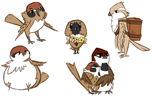Sparrow Concepts by Karry-Bird