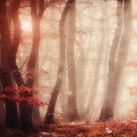 sublime trees by ildiko-neer